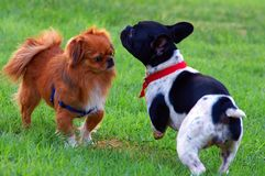 Friendship. Two cute dogs snooping each other at the park stock photo