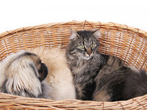 Friendship. Dog and cat relaxing together royalty free stock images