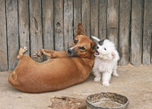 Friendship. Two cute dogs playing in the yard royalty free stock image