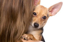 Friendship. Closeup portrait of doggy on female shoulder over white Stock Photo