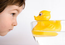 Friendship, boy and duck. Three years old boy watch to the eyes of duck Royalty Free Stock Photo