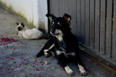 The friendship between cat and dog resting on the street. Friends, cat and dog, resting quietly on the street and watching the movement Royalty Free Stock Images