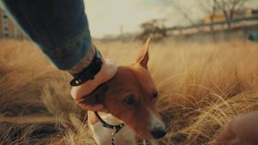 Friendship dog and his owner stock video