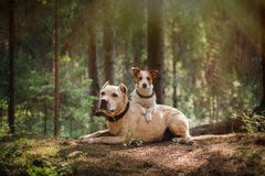 Friendship. Dogs in the forest Stock Photo