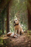 Friendship. Dogs in the forest Stock Photos