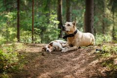 Friendship. Dogs in the forest Royalty Free Stock Image