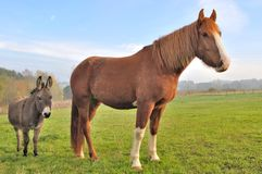 Friendship between a donkey and a horse Royalty Free Stock Photos