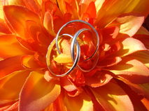 Friendship Flower. Artificial Orange Flower with Silver Friendship ring inside Stock Photography