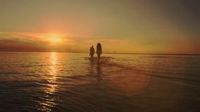 Friendship Freedom Beach Summer Holiday Concept. Beauty and joyful teenager friends having fun, dancing, spraying over. Summer sunset. Beach party. Sun flare stock video footage