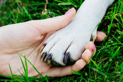 Friendship between human and animal Stock Images