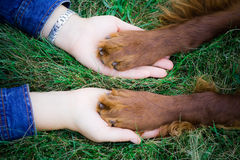 Friendship. Between the human and dog Royalty Free Stock Image