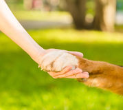 Friendship between human and dog - shaking hand and animal paw Royalty Free Stock Photo