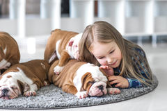 The friendship between a little girl and cute puppies of bulldog.  Royalty Free Stock Photos