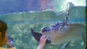 Friendship of the little girl and the tortoise. Child impressions about the underwater world and its inhabitants stock video footage