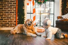 Friendship man child and dog pet. Theme Christmas New Year Winter Holidays. Baby boy crawling learns walk wooden floor decorated. Interior of house and best royalty free stock image