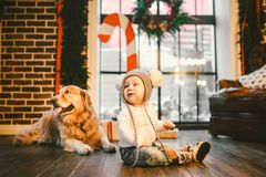 Friendship man child and dog pet. Theme Christmas New Year Winter Holidays. Baby boy crawling learns walk wooden floor decorated. Interior of house and best stock image