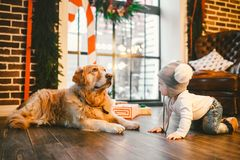 Friendship man child and dog pet. Theme Christmas New Year Winter Holidays. Baby boy crawling learns walk wooden floor decorated stock photo