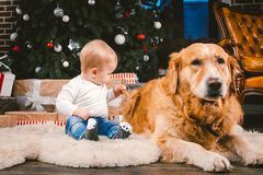 Friendship man child and dog pet. Theme Christmas New Year Winter Holidays. Baby boy on the floor decorated tree and best friend stock photos