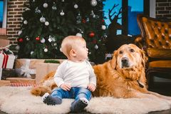 Friendship man child and dog pet. Theme Christmas New Year Winter Holidays. Baby boy on the floor decorated tree and best friend. Dog breed Labrador Golden royalty free stock photography