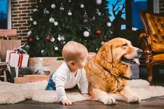 Friendship man child and dog pet. Theme Christmas New Year Winter Holidays. Baby boy on the floor decorated tree and best friend royalty free stock images