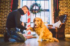 Friendship of man and dog. Pet golden retriever breed labrador shaggy dog. A man trains, teaches a dog to give a paw, to execute c stock photography