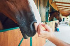 Friendship between man and horse Stock Images