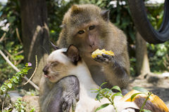 Friendship between the monkey and cat Stock Images