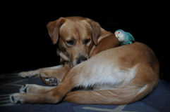 Friendship of parrot and a dog stock image