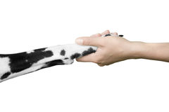 Friendship and  partnership between man and dog Stock Images