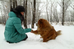 Friendship of the person with a dog stock photography