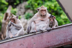 Friendship on the roof Royalty Free Stock Image