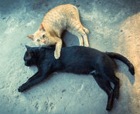 Friendship of the two cats Royalty Free Stock Image