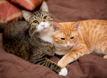 Friendship of the two  cats Stock Images