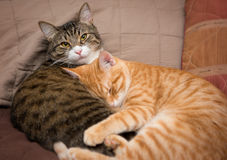 Friendship of the two  cats. Friendship of the two striped cats, orange and grey Royalty Free Stock Image