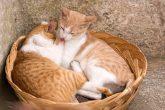 Friendship of the two striped cats. In Greece Stock Photo