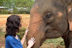 Friendship between woman and elephant Royalty Free Stock Images