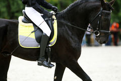 Friesian dressage horse with rider during training Royalty Free Stock Images