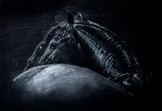 Friesian horse white pencil drawing on black paper portrait in vector format royalty free illustration
