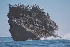 Frigate birds gather on rocky knoll. Royalty Free Stock Photography