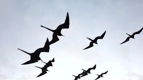 Frigate birds soar next to boat closeup
