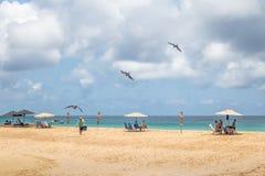 Frigatebird magnífico que vuela sobre gente en el Praia DA Conceicao Beach - Fernando de Noronha, Pernambuco, el Brasil imagen de archivo