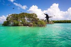 Frigatebirds y mangles Fotos de archivo