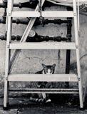 Frighten cat hiding behind a ladder royalty free stock photos