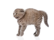Frightened baby kitten in profile. isolated on white background Stock Photo