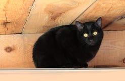 Frightened  black  cat Stock Photos