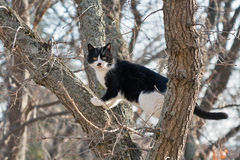 Frightened black and white cat sits on a high tree Royalty Free Stock Photo