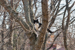 Frightened black and white cat sits on a high tree Stock Image