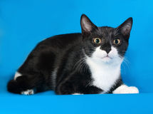 Frightened black and white kitten lying on blue Royalty Free Stock Image