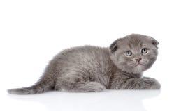 Frightened british shorthair kitten looking up. isolated on whit Stock Photos