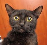 Frightened cat Royalty Free Stock Photos